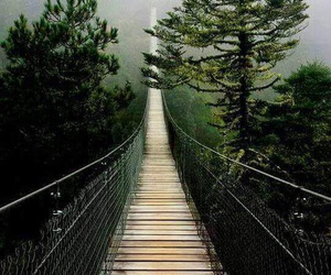 forest, nature, and bridge image