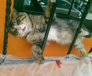 cat, precipicio, and funny image