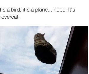 cat, funny, and hovercat image