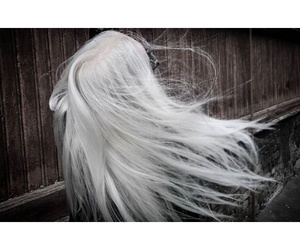 pale, silver, and white image