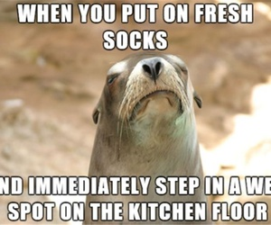 funny, socks, and animals image