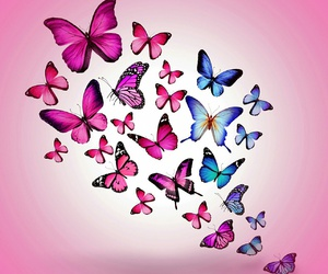 beautiful, butterflies, and pretty image