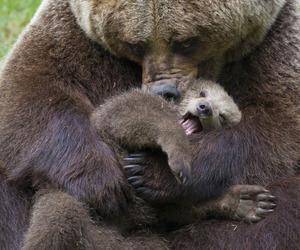 big bear hugs and that is one huge bear image