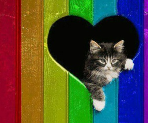 animal, cat, and heart image