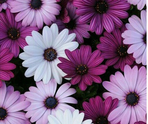 flowers, wallpaper, and purple image