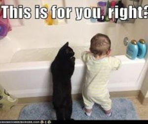 baby, bath, and cat image