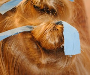 girls hairstyles, hairstyle ideas, and kids hairstyles image