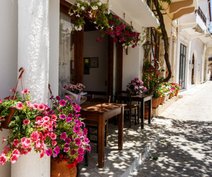 flowers, summer, and travel image