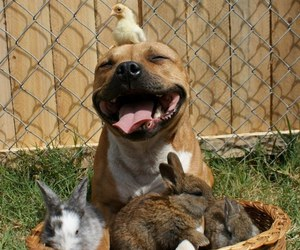 dog, animal, and rabbit image