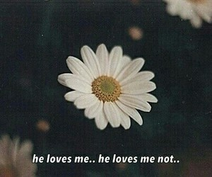 daisy, quote, and love image