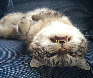 cat and grin image