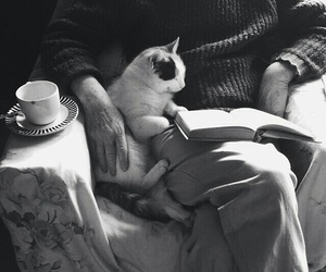 cat, book, and reading image
