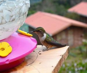 bird, paradise, and costa rica image