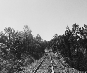train, woods, and bosque image