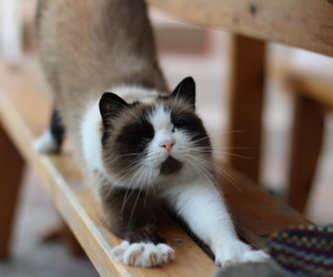 cat, OMG, and relax image