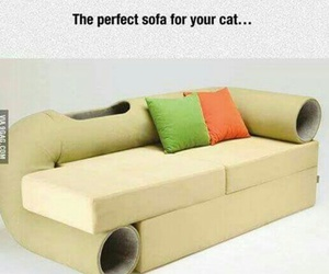 cat, funny, and funny pictures image