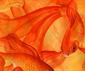 orange and fish image