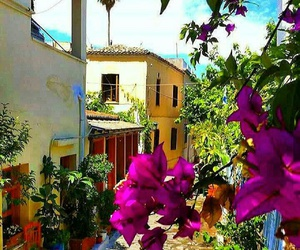 Athens, flower, and Greece image