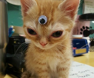 cat, cute, and alien image
