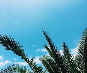 sky, nature, and palms image