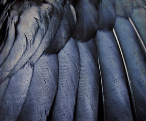 blue, bird, and feather image