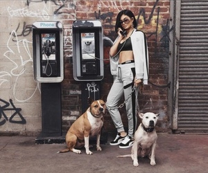 dogs, puma, and kylie jenner image