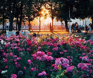 moscow, flowers, and park image