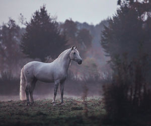 horse and dawn image
