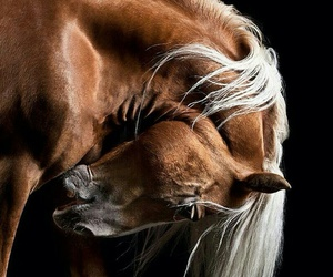 amazing, horse, and 😍 image