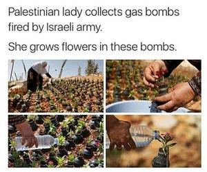 islam, palestine, and flowers image