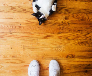 adorable, cat, and shoes image