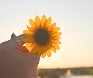 flower, sunset, and tumblr image