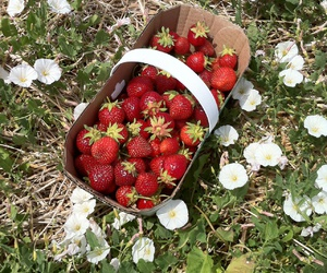nature, strawberries, and picking image