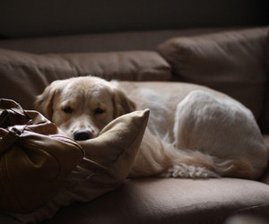 dog, cute, and photography image