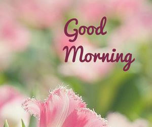 good morning and flowers image