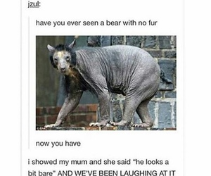 bear, funny, and tumblr image
