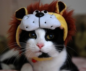 cat, hat, and funny image
