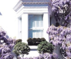 flowers, purple, and house image