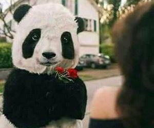 panda and 💞 image