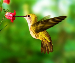 bird, colibri, and animal image