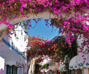 flowers, travel, and spain image