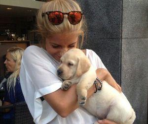 dog, tumblr, and carefree image