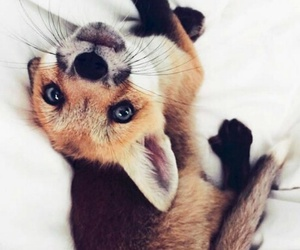 fox, animal, and pet image