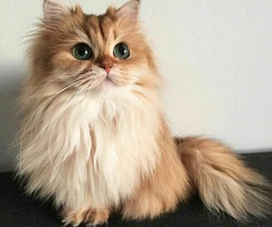 cat, cute, and af image