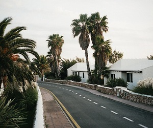summer, road, and palm trees image