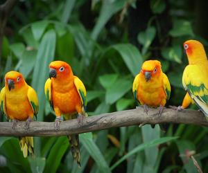 bird, tropical, and animal image