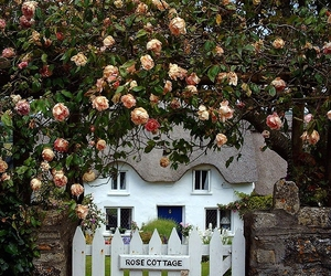 rose, cottage, and house image