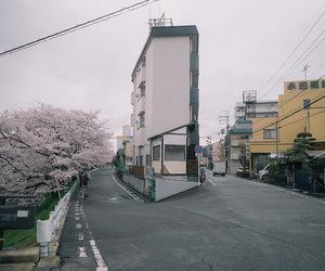 alternative, asia, and cherry blossom image