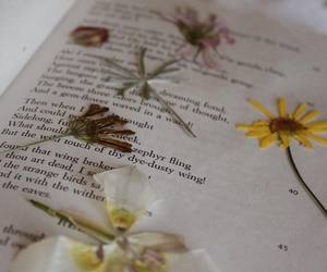 book, flower, and poetry image