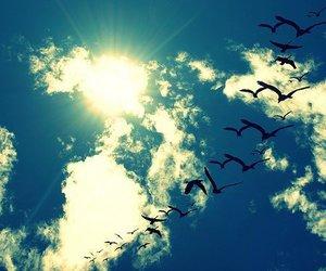 bird, sky, and sun image